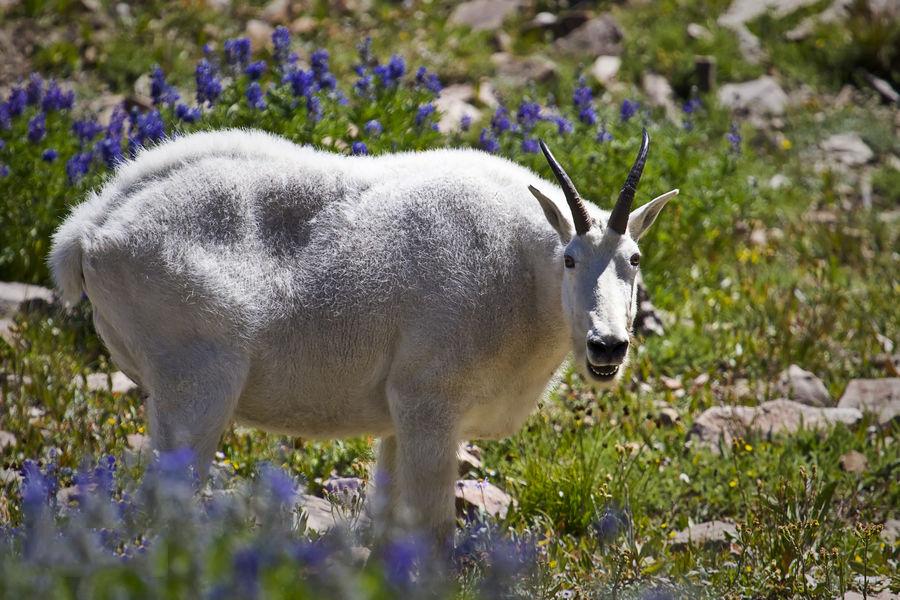 级重点保护野生动物